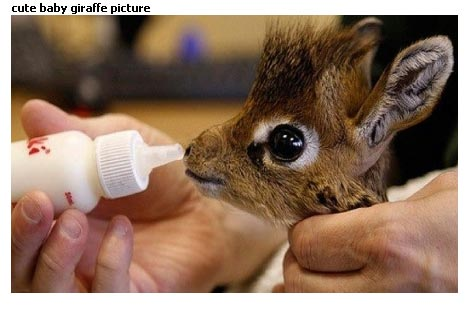 cute-baby-giraffe-picture1
